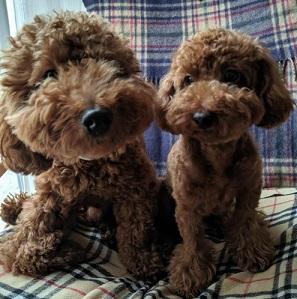 犬の終活を始めましょう!大好きなペットとのお別れの時のために考えておきたいこと。