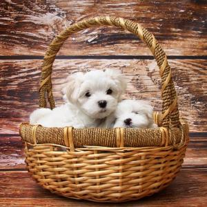 愛犬の防災グッズに何が必要?これだけは準備しておきたいリストをご紹介します!