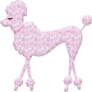 トイプードル人気のカット3種類をご紹介!愛犬にぴったりのカットを見つけましょう!