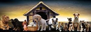 犬の発情期に見られる変化と注意点は?オスとメスの違いをご紹介します。