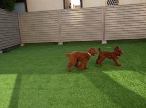 愛犬のために庭を人工芝でドッグランDIYしてみた!気になる値段と作り方は?