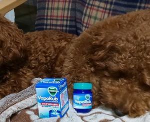 咳を止める方法「足裏ヴィックスヴェポラップ」を試した結果は?