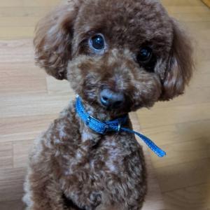 愛犬の「幸せ」って何?犬を幸せにする4つの方法!