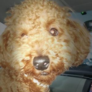 「愛犬の幸せ感をチェック!」今すぐあなたの愛犬を観察してみて!