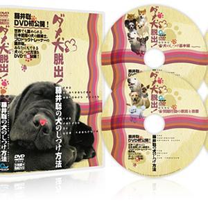 ダメ犬脱出、藤井聡の犬のしつけ方法DVDを徹底レビュー!犬の問題行動は治るのか?