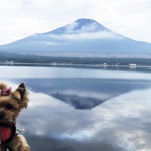 疲れた心と体を癒してくれた富士山