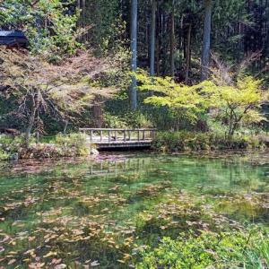 モネの池と郡上八幡城へ