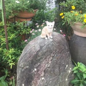 庭の護り猫