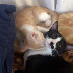 【犬猫動物動画まとめ】2匹でグルーミングしている子猫が可愛かった
