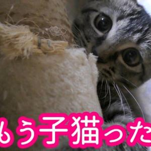 【犬猫動物動画まとめ】子猫がうちにやって来た 子猫の可愛い表情満載に負けました