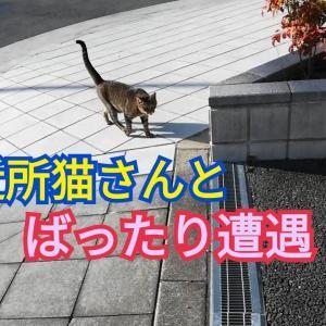 仲の良い地域猫さんと出会いました
