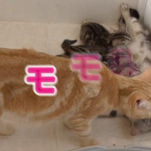 【犬猫動物動画まとめ】ココの子猫と小鉄