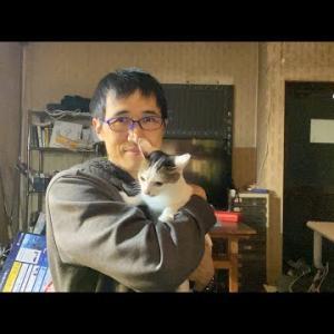 【犬猫動物動画まとめ】Liveたまに猫の居る談話室567