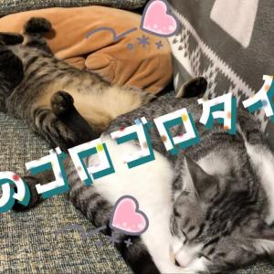 猫ルッコラは激しいなでなでがお好き💕ローリエとルッコラの寝相がかわいい🐱💕🌱🐾