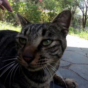 よくしゃべる猫をなでなでしたら喜んでくれた When I was stroking a cat that I often talk to, the cat was happy