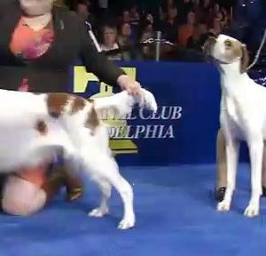 【犬猫動物動画まとめ】National Dog Show Presented by Purina