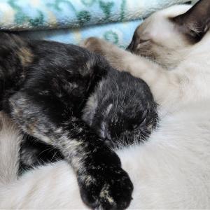 【犬猫動物動画まとめ】【癒し猫動画】猫たちが眠るまで見守る Watch until the cats go to sleep ,Healing cat videos