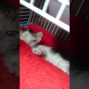 【犬猫動物動画まとめ】Rescue kitten terbuang