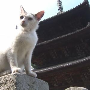 Japan Cat Trip, Onomichi2-Day2 / 日本猫旅,尾道2-2日目