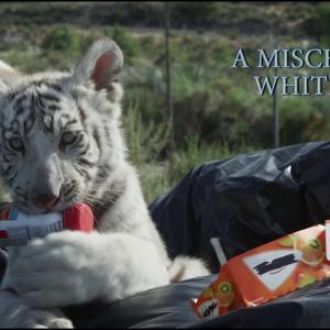 【犬猫動物動画まとめ】Toby's Big Adventure Movie