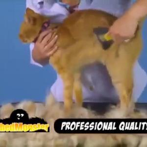 【犬猫動物動画まとめ】Oster ShedMonster De-Shedding Tool, Medium or Long Coats (DRP-SHED-RPQL) | PuppySimply
