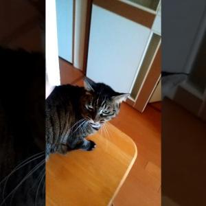 猫 ジャンプして撫で撫で