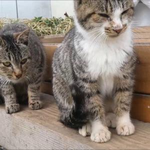 猫を一匹なでなでしていたら、もう一匹寄ってきた