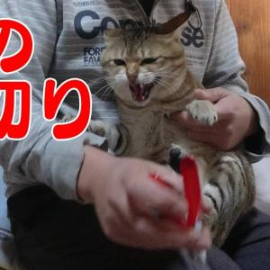 【猫の日】小鉄の休日~猫の爪を切ろう~/Cat's Day