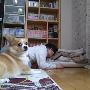 【犬猫動物動画まとめ】我が家のミニチュアダックスは、自分から布団に入ろうとしません。