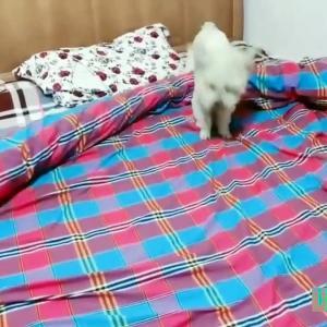 【犬猫動物動画まとめ】Cute and Funny Dogs Videos Compilations  | Funny Animal Fails Compilations