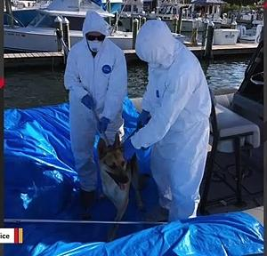 【犬猫動物動画まとめ】Florida Dog Rescued From Boat After Coronavirus Lands Owner In The Hospital