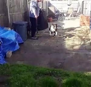 【犬猫動物動画まとめ】Finally something large Enough for Bruno The Pitbull to Chew on!