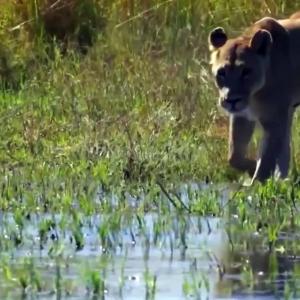 【犬猫動物動画まとめ】Hyena Were Punished After Stealing Prey From Wild Dogs    Crazy Hunt