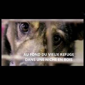 【犬猫動物動画まとめ】LA COMPLAINTE DU CHIEN ABANDONNE (AU FOND DU VIEUX REFUGE) - TRIBUTE A GILBERT DUMAS