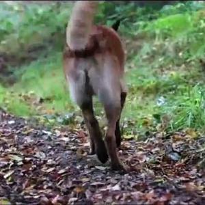 【犬猫動物動画まとめ】LA COMPLAINTE DU CHIEN ABANDONNE - Yves Scheer