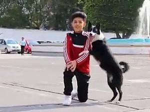 【犬猫動物動画まとめ】Dog funny video ( part -1]