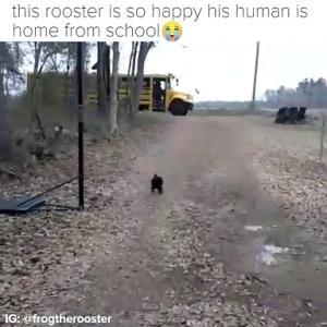 【犬猫動物動画まとめ】Pretty sure this rooster is actually a dog