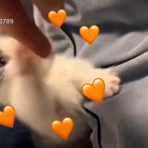 【犬猫動物動画まとめ】Aww - Funny and Cute Dog and Cat Compilation 2019 #28 - CuteVN