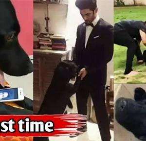 【犬猫動物動画まとめ】Sushant aur fodge ki iss video dekh kar dusman ko bhi rona aajayega