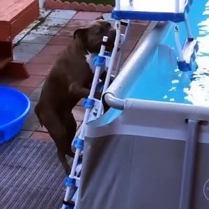 【犬猫動物動画まとめ】Max Climbs Pool Ladder for a Dip
