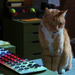 【犬猫動物動画まとめ】Cats & Dogs 3 Paws Unite! Movie