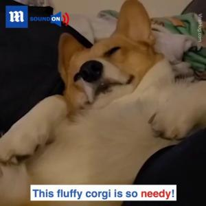 【犬猫動物動画まとめ】This dog is NOT happy when the belly rubs stop ------ via ViralHog