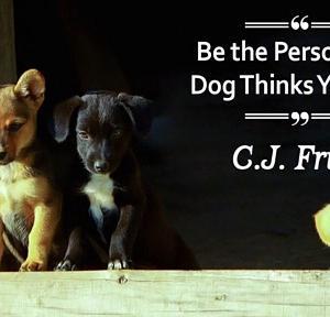 【犬猫動物動画まとめ】International Dog Day 2020: Cute Quotes And HD Images To Greet Canine Lovers