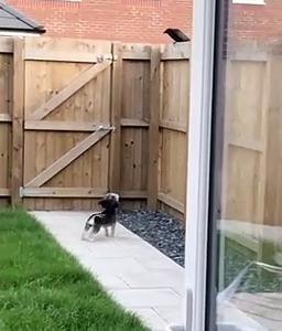 【犬猫動物動画まとめ】Small Dog Is all Bark