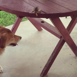 【犬猫動物動画まとめ】Baby Turtle Falls Off Table