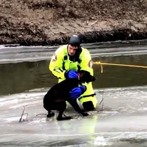 【犬猫動物動画まとめ】Dog stranded on river ice rescued in North Dakota
