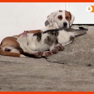 【犬猫動物動画まとめ】Dog allows her furry cat friends to nurse