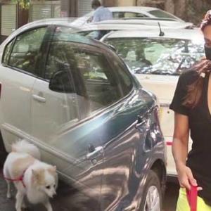 【犬猫動物動画まとめ】Malaika Arora अपने डॉग को घुमाने निकली तो हुआ ये सब; Watch video | FilmiBeat