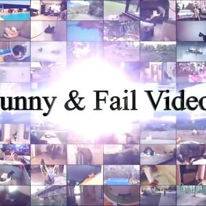 【犬猫動物動画まとめ】Funny Cats And Dogs Part 5 - Funny Cats Vs Dogs - Funny Animals Compilation