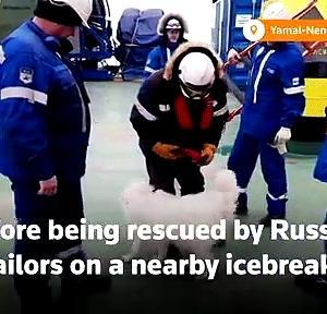 【犬猫動物動画まとめ】Sailors rescue dog from cracking Arctic ice